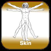Anatomie - Haut